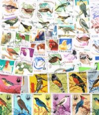 50 different birds in complete sets packet